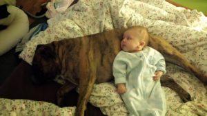 sarcastic parent dog love
