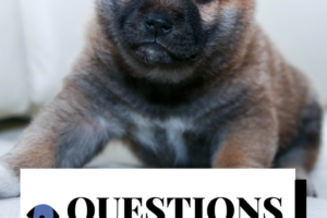 Questions to be sure to ask a Breeder
